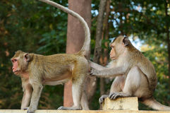 Mono del padre y de la madre. Imagen de archivo