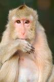 Mono del padre y de la madre. Imagen de archivo libre de regalías