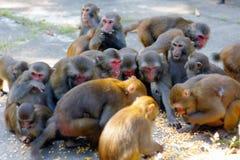 Mono del racimo Fotos de archivo
