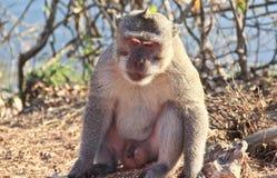 Mono desanimado foto de archivo