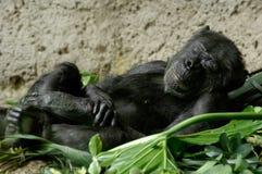 Mono el dormir imagenes de archivo
