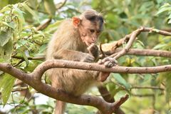 Mono en árbol imagen de archivo