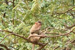 Mono en árbol imágenes de archivo libres de regalías