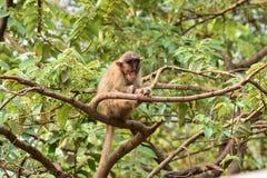 Mono en árbol imagen de archivo libre de regalías