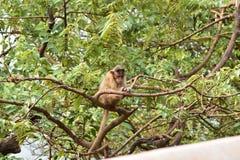 Mono en árbol imagenes de archivo