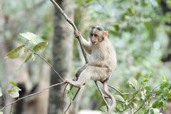 Mono en árbol fotografía de archivo