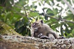 Mono en árbol Fotos de archivo