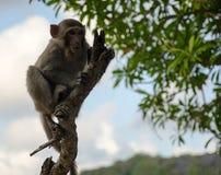 Mono en árbol Foto de archivo