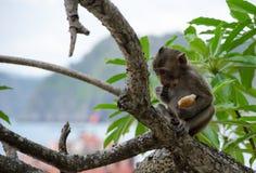 Mono en árbol Foto de archivo libre de regalías