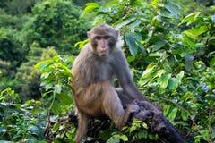 Mono en árbol tropical en selva Fotos de archivo
