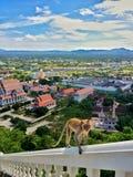 Mono en alto punto de vista Fotos de archivo libres de regalías