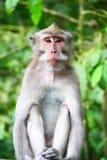 Mono en bosque del mono Foto de archivo libre de regalías