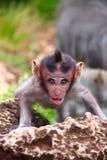 Mono en bosque del mono Fotos de archivo