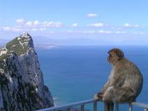 Mono en cercar con barandilla en Gibraltar Imagenes de archivo