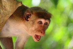 Mono en choque imágenes de archivo libres de regalías