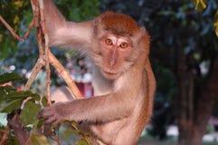 Mono en el árbol Fotografía de archivo libre de regalías