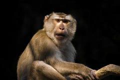 Mono en el árbol Foto de archivo