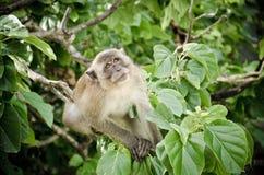 Mono en el árbol Imagen de archivo libre de regalías