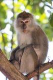 Mono en el árbol Fotos de archivo libres de regalías