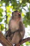 Mono en el árbol Imagen de archivo