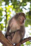 Mono en el árbol Fotos de archivo