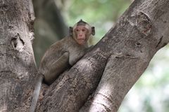 Mono en el árbol Foto de archivo libre de regalías