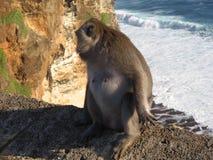 Mono en el borde Fotografía de archivo