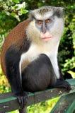 Mono en el bosque Imágenes de archivo libres de regalías