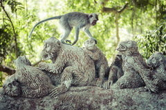 Mono en el bosque sagrado del mono, Ubud, Bali, Indonesia Fotos de archivo libres de regalías