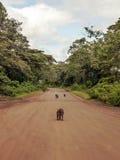 Mono en el camino imagenes de archivo