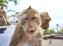 Mono en el coche Fotografía de archivo