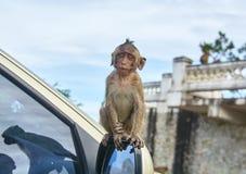 Mono en el coche Fotos de archivo libres de regalías