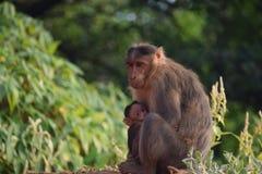Mono en el movimiento Foto de archivo