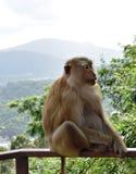 Mono en el parque nacional, Tailandia Fotos de archivo