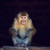 Mono en el refugio Fotos de archivo