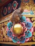 Mono en el templo Fotografía de archivo