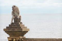 Mono en el templo de Uluwatu Fotografía de archivo libre de regalías
