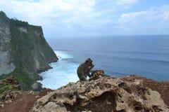 Mono en el templo de Uluwatu - isla de Bali, Indonesia Imagenes de archivo