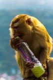 Mono en el templo grande de Buda Fotos de archivo libres de regalías