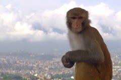 Mono en el top Foto de archivo