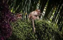Mono en el top de la palmera imagenes de archivo