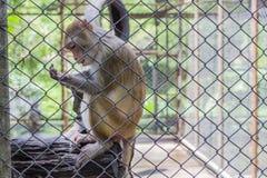 Mono en jaula Fotografía de archivo libre de regalías