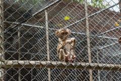Mono en jaula Imágenes de archivo libres de regalías