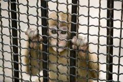 Mono en jaula Imagen de archivo