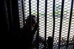 Mono en jaula foto de archivo