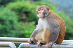 Mono en Kam Shan Country Park, Kowloon fotografía de archivo libre de regalías