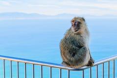 Mono en la cerca Imagenes de archivo