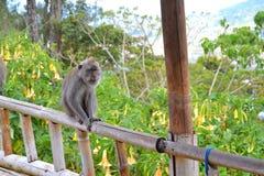 Mono en la cerca de bambú Imagen de archivo