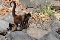 Mono en la isla del mono Imagen de archivo