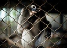 Mono en la jaula Imagen de archivo libre de regalías